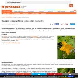 Courges et courgette : pollinisation manuelle