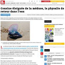 SUD OUEST 17/07/11 Cousine éloignée de la méduse, la physalie de retour dans l'eau