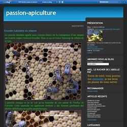Couvain tubulaire ou chauve - Le blog de abeille pat
