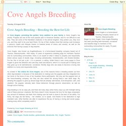 Cove Angels Breeding: Cove Angels Breeding – Breeding the Best for Life