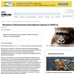 VETANDLIFE_RU 01/02/21 TRAD AUTO : Aux États-Unis, des vétérinaires ont guéri un gorille âgé de COVID-19