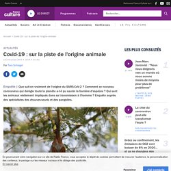Covid-19 : sur la piste de l'origine animale