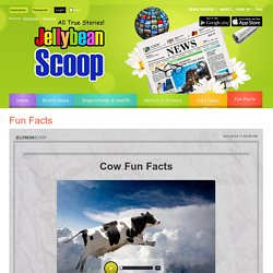 Cow Fun Facts