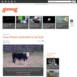 Cow Power potential is no bull