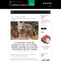 Coyotes live in almost all US cities. Here's how to avoid trouble with them
