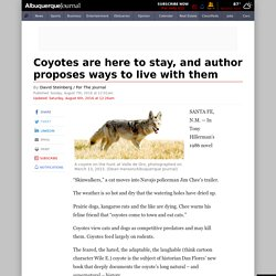 Coyotes are here to stay, and author proposes ways to live with them