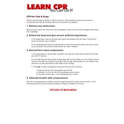 CPR Instructions Cats And Dogs