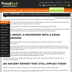Reishi Cracked Shell Spores: Rev Up Brain Power and Immunity - PrimalHerb.com
