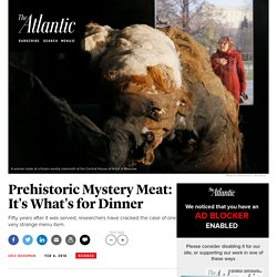 Cracking the Case of the Explorers Club Mystery Meat