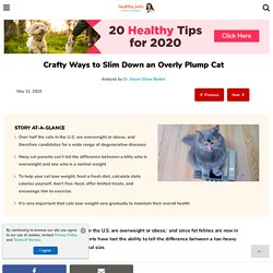 Crafty Ways to Slim Down an Overly Plump Cat