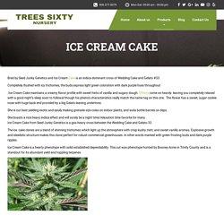 ICE CREAM CAKE - Trees Sixty Nursery Los Angeles