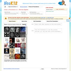 Create a Presentation at NeoK12 on Nervous System