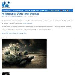 Create a Surreal Turtle Image - Photoshop Tutorial
