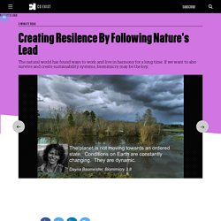 Creating Resilence By Following Nature's Lead