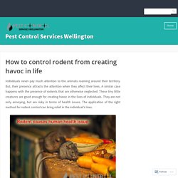 How to control rodent from creating havoc in life – Pest Control Services Wellington