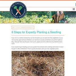 Creative Vegetable Gardener:8 Steps for Expertly Planting a Seedling - Creative Vegetable Gardener