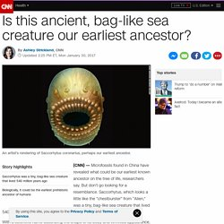 Could this ancient, bag-like sea creature be our earliest ancestor? - CNN.com