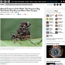 Absurd Creature of the Week: The Ferocious Bug That Sucks Prey Dry and Wears Their Corpses
