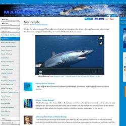 Marine Life - Sea creatures, Ocean biology, Marine conservation...