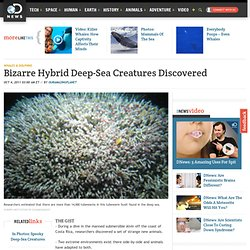 Bizarre Hybrid Deep-Sea Creatures Discovered