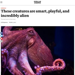 Octopuses are smart, playful