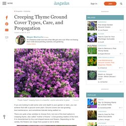 Creeping Thyme Ground Cover Types, Care, and Propagation