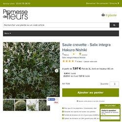 Salix integra Hakuro Nishiki - Saule crevette - Feuillage rose, blanc et vert d'une grande originalité