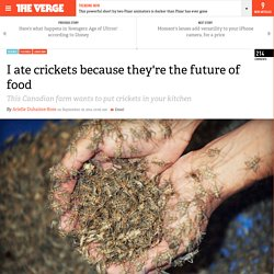 I ate crickets because they're the future of food