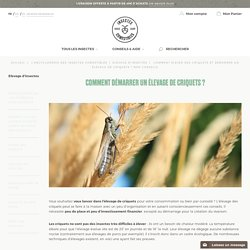 Comment élever des criquets et démarrer un élevage de criquets ? Nos conseils - InsectesComestibles.fr
