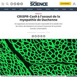 CRISPR-Cas9 à l'assaut de la myopathie de Duchenne