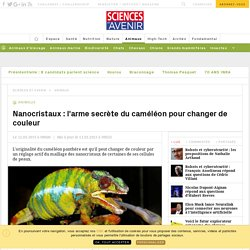 Nano-cristaux: l'arme secrète du caméléon pour changer de couleur - Sciencesetavenir.fr