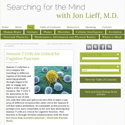 Immune T Cells Are Critical for Cognitive Function