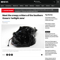 Meet the creepy critters of the Southern Ocean's 'twilight zone'