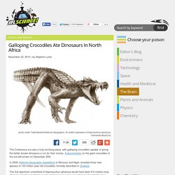 Galloping Crocodiles Ate Dinosaurs In North Africa