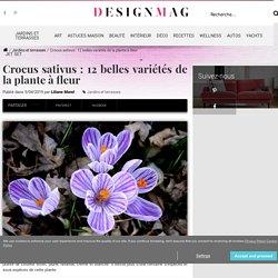 Crocus sativus : 12 belles variétés de la plante à fleur