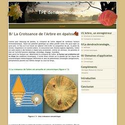 B/ La Croissance de l'Arbre en épaisseur - TPE dendrochronologie
