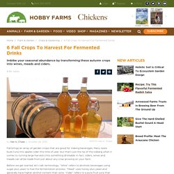 6 Fall Crops To Harvest For Fermented Drinks