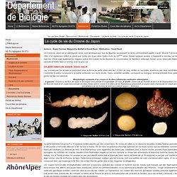 Le cycle de vie du Crosne du Japon — Site du Département de Biologie - ENS Lyon