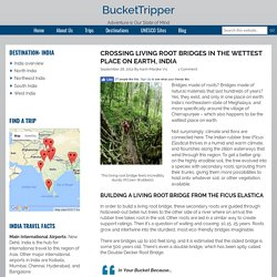 Item 6 - Crossing Living Root Bridges in the Wettest Place on Earth, India — BucketTripper