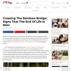 Crossing The Rainbow Bridge: Signs That The End Of Life Is Near iHeartDogs.com