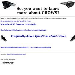 crow info