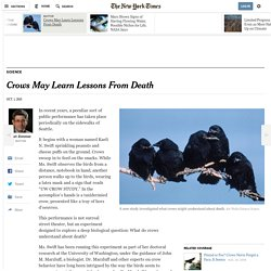 Crows May Learn Lessons From Death