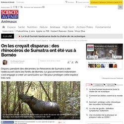 On les croyait disparus : des rhinocéros de Sumatra ont été vus à Bornéo