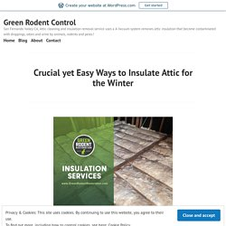 Crucial yet Easy Ways to Insulate Attic for the Winter – Green Rodent Control