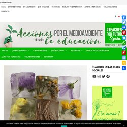 Cuadernos botánicos. Huellas de naturaleza. - Teachers For Future Spain