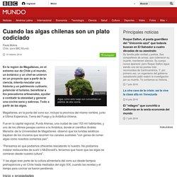 Cuando las algas chilenas son un plato codiciado - BBC Mundo