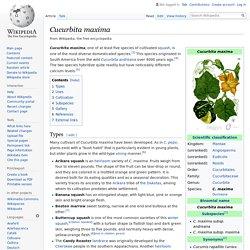 EN_WIKIPEDIA – Cucurbita maxima.