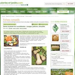Semer et planter les cucurbitacées : courges, potirons, citrouilles