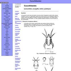 DEFENSE DES CULTURES AU TCHAD - Cucurbitacées (concombre, courgette, melon, pastèque)