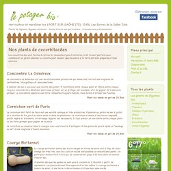 Nos plants de cucurbitacées, courges, courgettes - Le Potager Bio